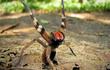 Rùng mình loài nhện kịch độc đi lang thang cắn chết người