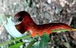 Chết khiếp loài sâu bướm hình sọ người cực hiếm ở Australia