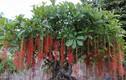 8 cây cảnh phải trồng trong nhà để hút vận may, tài lộc