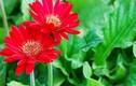 Những loại hoa mang may mắn, tài lộc ngày Tết
