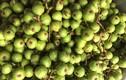 Loại quả ở quê để rụng đầy ao, lên Hà Nội muốn mua cũng khó