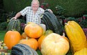 Thăm vườn rau củ khổng lồ của lão nông xứ Wales