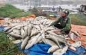 Người dân hoang mang hiện tượng cá chết bất thường ở nhiều địa phương
