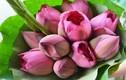 Mẹo giữ hoa sen tươi lâu không phải ai cũng biết