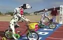 """Cuộc đua xe đạp """"chậm"""" nhất mọi thời đại"""