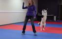 """Chú chó và màn dancing """"cực đỉnh"""" khi phối hợp với chủ"""