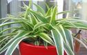 Video: 11 loại cây cảnh hút khí độc cực tốt nên trồng trong nhà