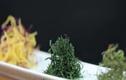 Video: Mẹo chiên rau củ vàng tươi và giòn rụm