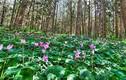 Khám phá khó tin về thính giác các loài hoa