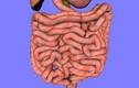 Những bí mật thú vị bên trong hệ thống tiêu hoá của con người