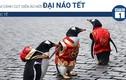 Video: Chim cánh cụt diện áo mới đại náo Tết