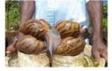 Hãi hùng ba món ăn siêu kinh dị của châu Phi