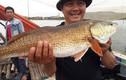 Cần thủ câu được cá lạ, nghi cá sủ vàng ở Quảng Bình