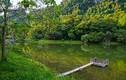 Rừng Cúc Phương đứng top 3 thiên đường cho người mê động vật