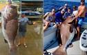 """Choáng váng bắt cá """"thành tinh"""", lớn hơn người, nặng 158kg"""