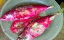 Vi khuẩn Serratia marcescens khiến cá bạc má đổi màu đỏ có nguy hiểm?