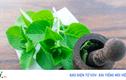 10 tác dụng tuyệt vời cho sức khỏe của lá húng chanh