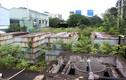 Video: Rừng rậm bao phủ trạm xử lý nước thải tiền tỷ ở Hà Nội