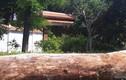 Video: Cổng biệt phủ trăm tỷ xây trái phép của đại gia la liệt gỗ quý
