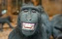 """""""Chết cười"""" với muôn kiểu sắc thái của động vật"""