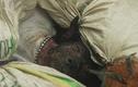 Cảnh tượng kinh hoàng trong các lò giết mổ thịt chó TG