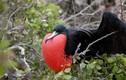 """Sự thực bất ngờ sau những """"quái"""" chim lạ nhất trên đời"""