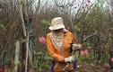 Ảnh: Người dân hối hả đến làng Nhật Tân mua đào, đem ra chợ bán