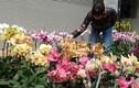 Ảnh: Sắc hoa rực rỡ tại phố hoa nổi tiếng nhất Hà Thành