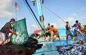 Con số giật mình: 83 loài hải sải biến mất khỏi vùng biển Việt Nam