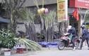 Mía lộc xuất hiện đầy đường phố Hà Nội chiều 30 Tết