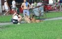 Vụ bé trai tử vong do chó cắn: CĐM phẫn nộ việc nuôi chó thả rông