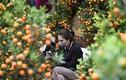 Chợ hoa cảnh ngày giáp Tết: Giá cả thế nào.... chủ buôn ngậm ngùi?