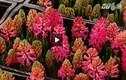 Chiêm ngưỡng nhiều loài hoa lạ tại hội chợ hoa Tết 2015