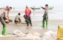 Ngư dân miền Trung thu hoạch sứa biển, đút túi tiền triệu/ngày
