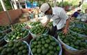 Những ngôi làng trồng cam giàu có ở Việt Nam
