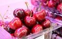 """Cherry, việt quất, cua hoàng đế...giá rẻ tranh nhau """"đổ bộ"""" chợ Việt"""