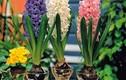 6 loại cây phong thủy không cần đất, trồng trong nhà cực kỳ may mắn