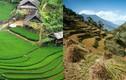 """Choáng ngợp """"ruộng bậc thang Việt Nam"""" trên dãy Himalaya"""