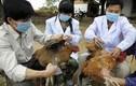 Phát hiện 2 ca nghi nhiễm cúm gia cầm H5N1 dịp Tết Nguyên Đán