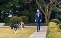 Cuộc sống mới của Tổng thống Biden qua ống kính nhiếp ảnh gia Nhà Trắng