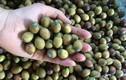 Video: Ăn nhiều hạt sen tươi có tốt không?