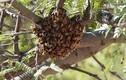 Video: Điều gì xảy ra khi ong làm tổ trong nhà