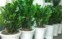 Video: Muốn tài lộc vào nhà như nước hãy trồng cây phong thủy này