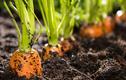 Video: Khám phá 3 thực phẩm đen vàng xanh cho người gan yếu