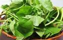 Lý do bạn nên ăn rau má thường xuyên