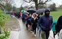 5.000 người xếp hàng dưới mưa chờ hiến tế bào cứu bé trai 5 tuổi