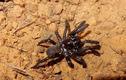 """Vừa nhận giải thọ nhất thế giới, """"cụ"""" nhện bỗng bị ong... đốt chết"""