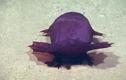 Video: Khám phá biển sâu, phát hiện quái vật không đầu đi bộ kiếm ăn