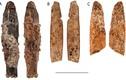 Video: Tìm thấy con dao cổ đại hơn 90.000 năm tuổi