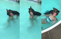 Video: Chủ giả vờ chết đuối, ngỡ ngàng trước hành động của chó